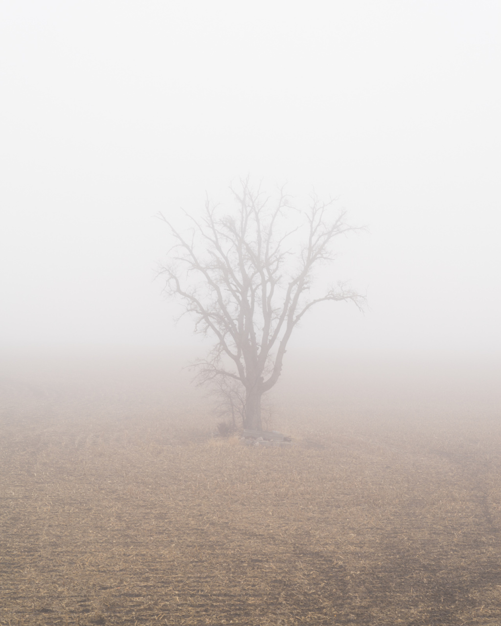 cottonwood in fog