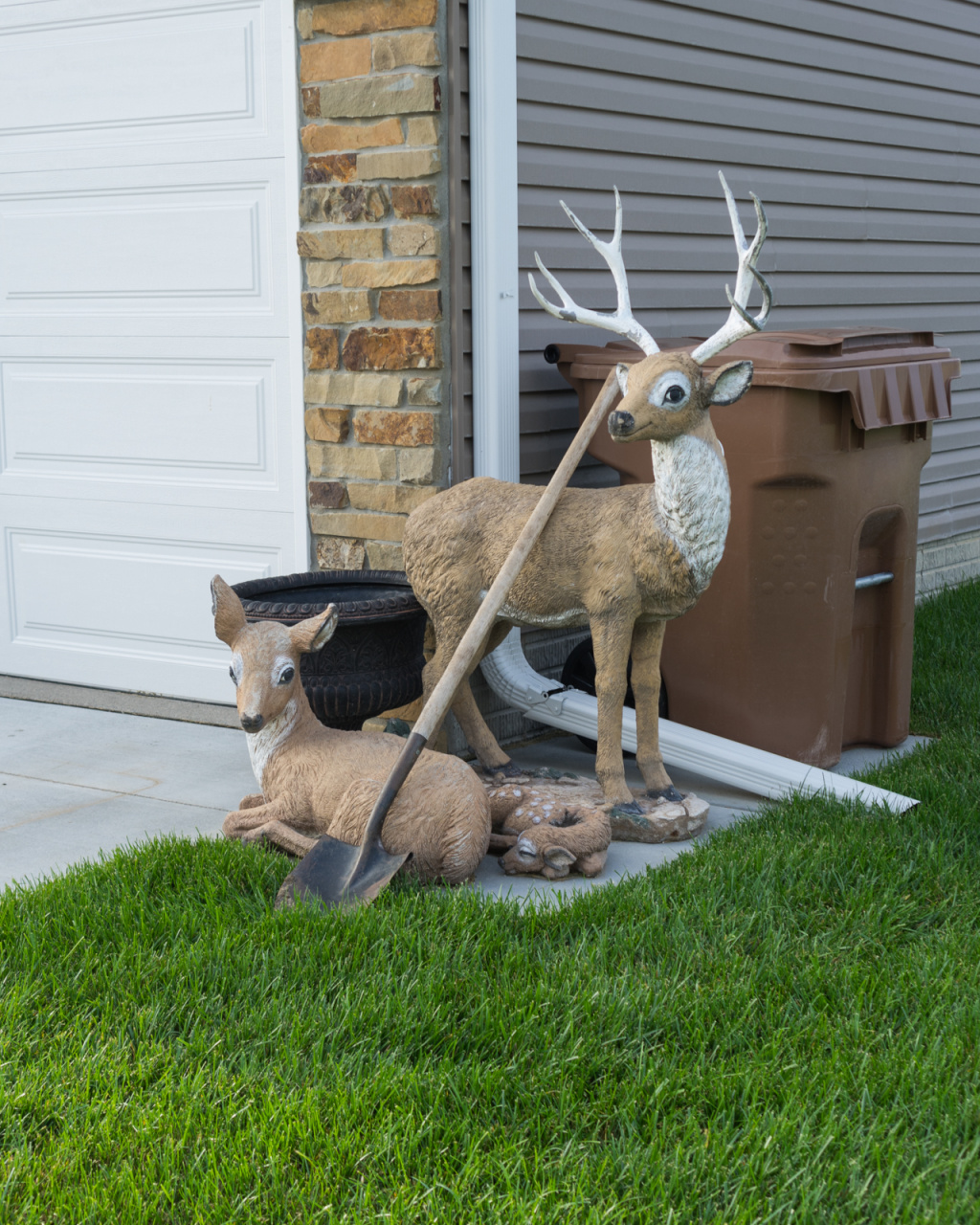 deer in the suburbs